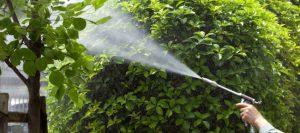 lawn-garden-bug-spraying