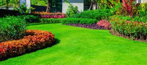 lawn-renovation-top-dressing
