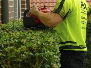 hedging-pruning